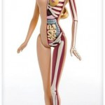 Anatomia da Barbie