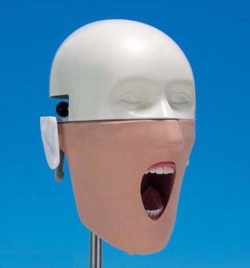 manequim-odontologia-5